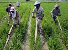 Pengertian Pertanian Menurut Para Ahli Dilihatya