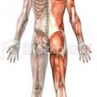 Fungsi Tulang dan Otot