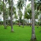 Manfaat Pohon Kelapa bagi Masyarakat
