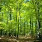 Manfaat Hutan bagi Kehidupan